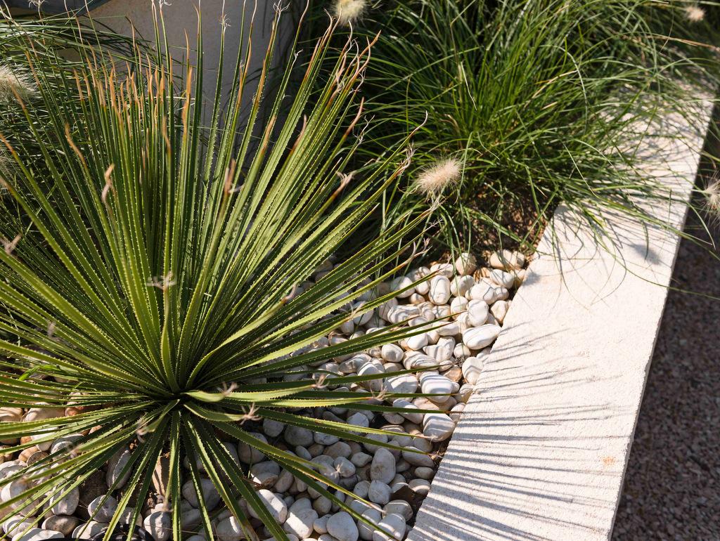 Aménagement d'un jardin moderne végétaux