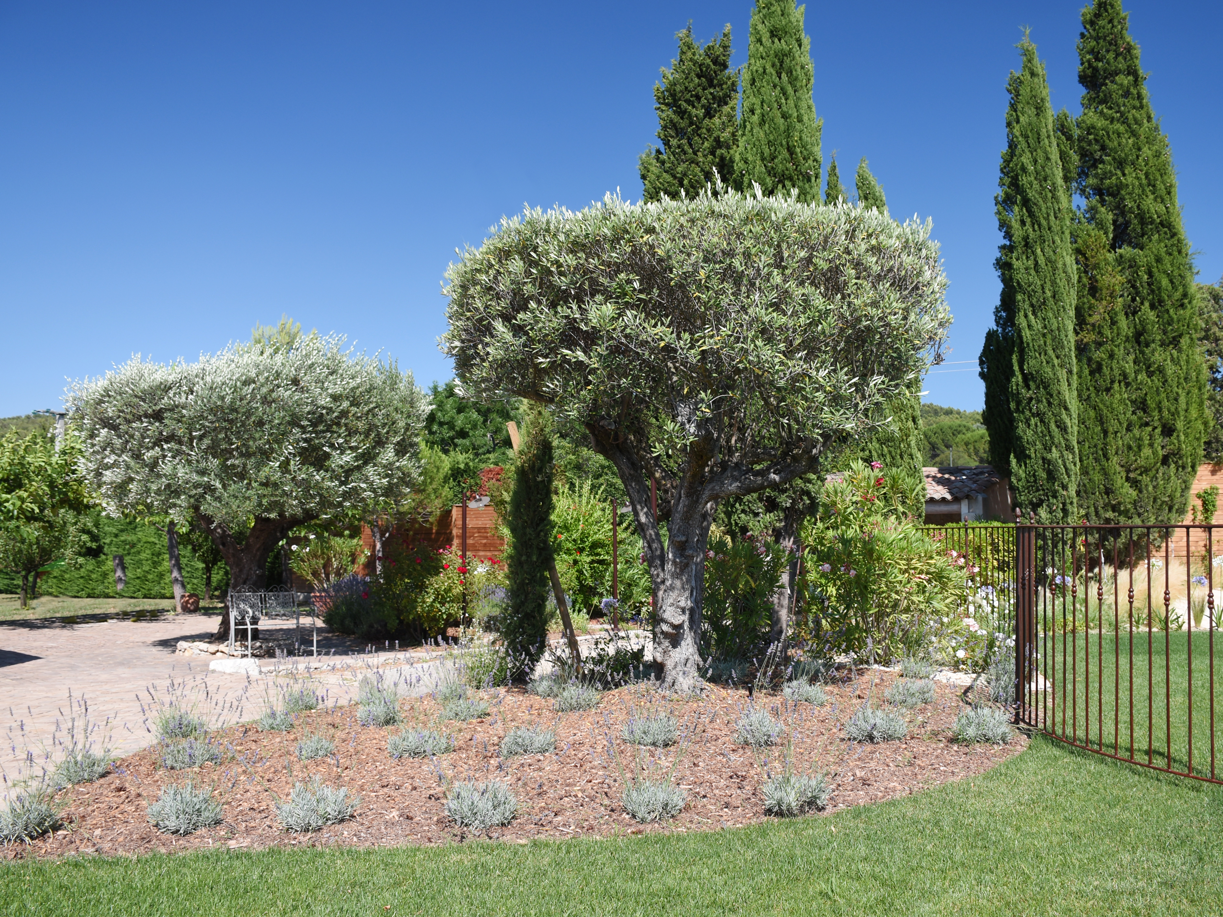 Aménagement d'un jardin extérieur avec un olivier