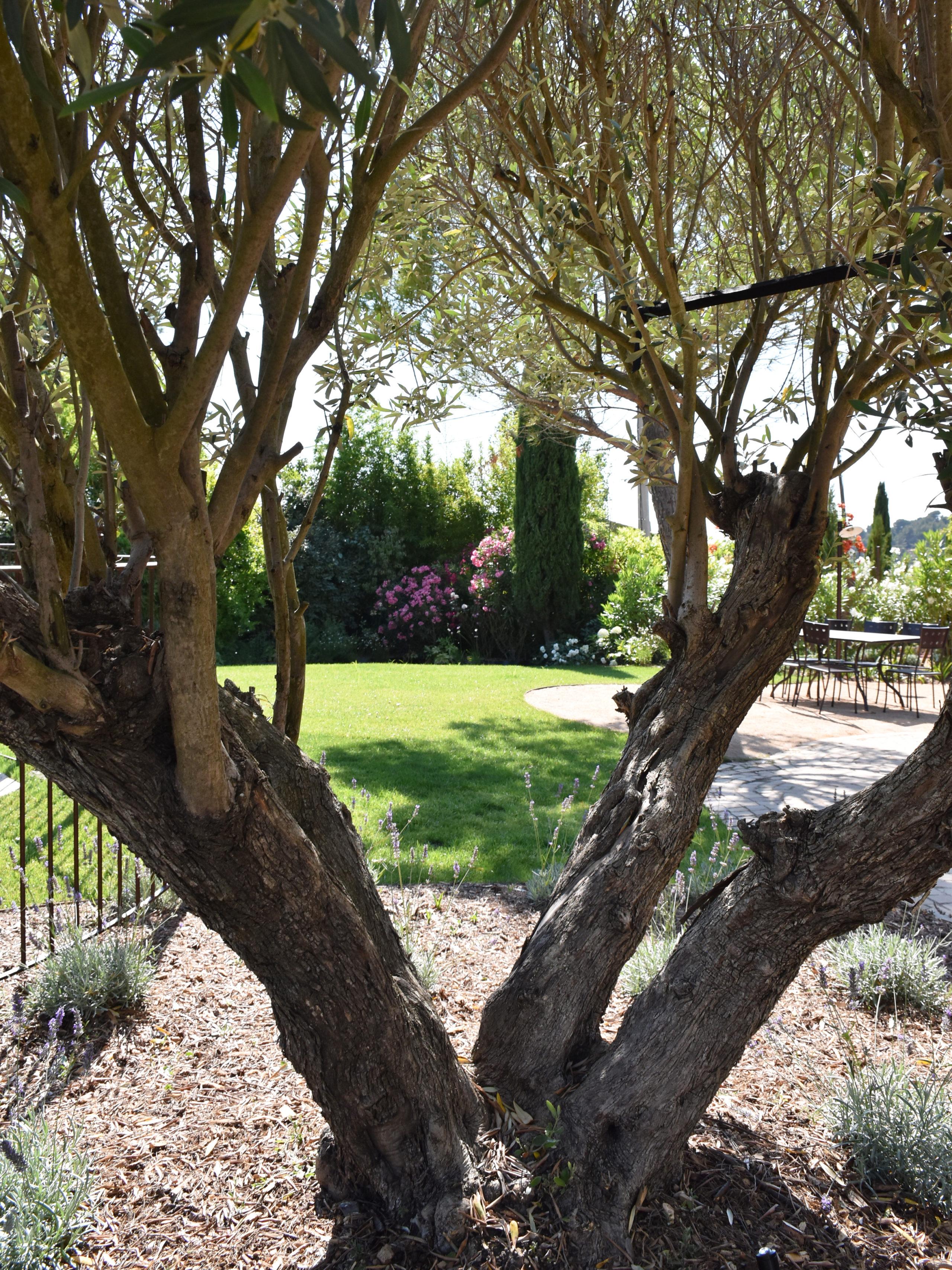 Aménagement d'un jardin extérieur avec vue de l'ensemble