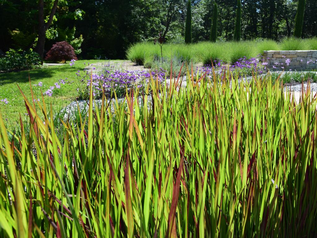 Aménagement paysager réalisation avec végétation