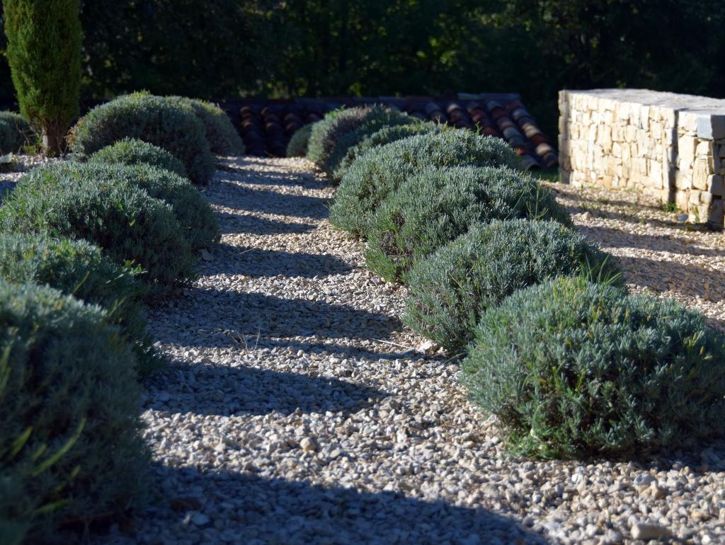 Création jardin extérieur lavande