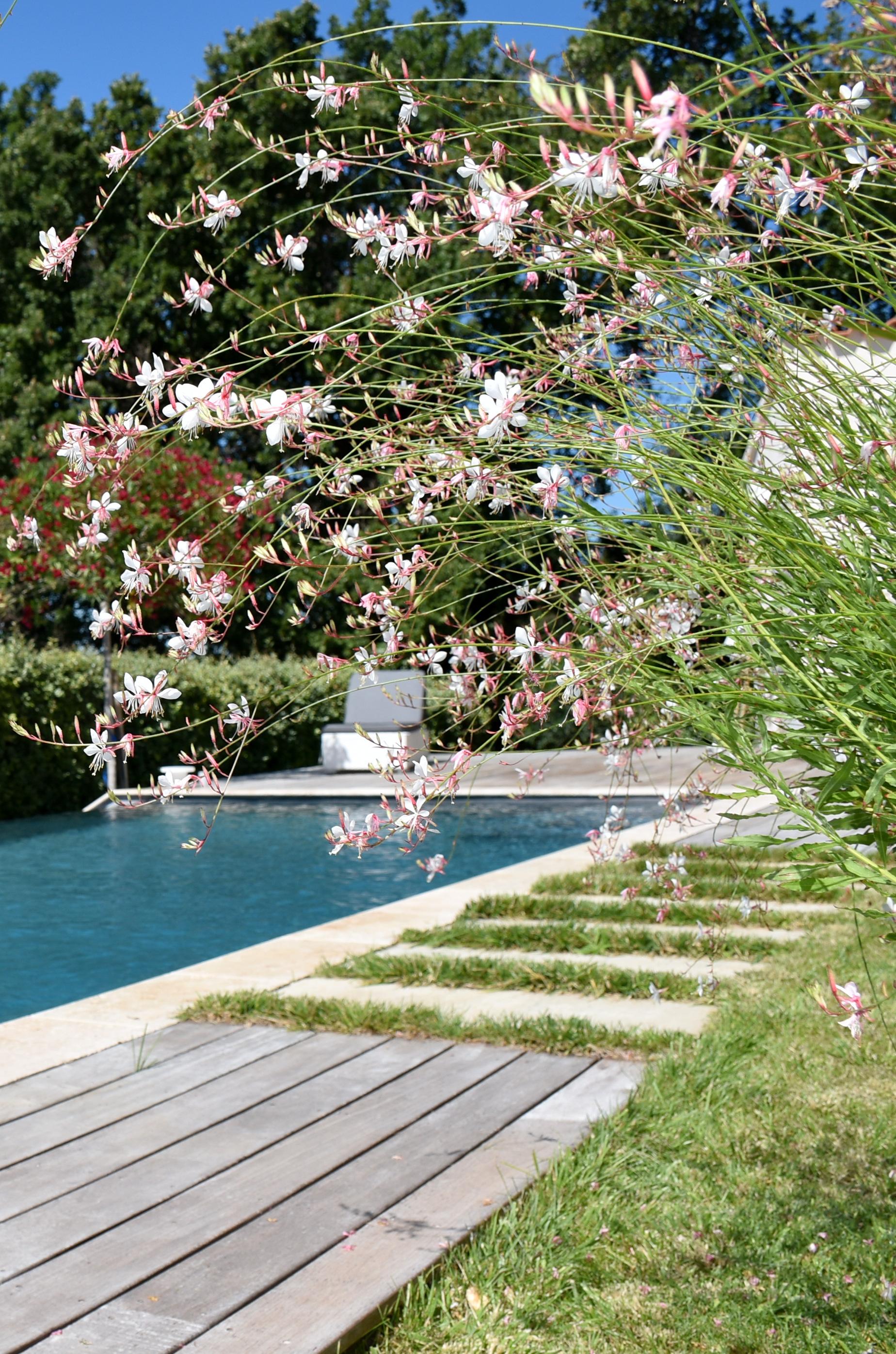 Piscine haut de gamme fleurs en été